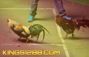 Sabung Ayam Live Filipina