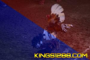 Sabung Ayam Online SV388