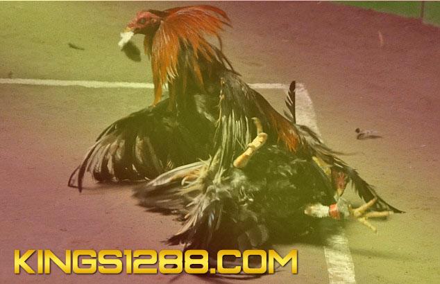 Situs Adu Ayam S128