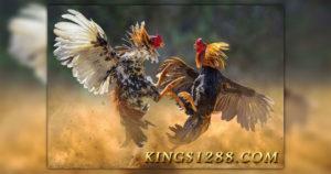 Agen Sabung Ayam
