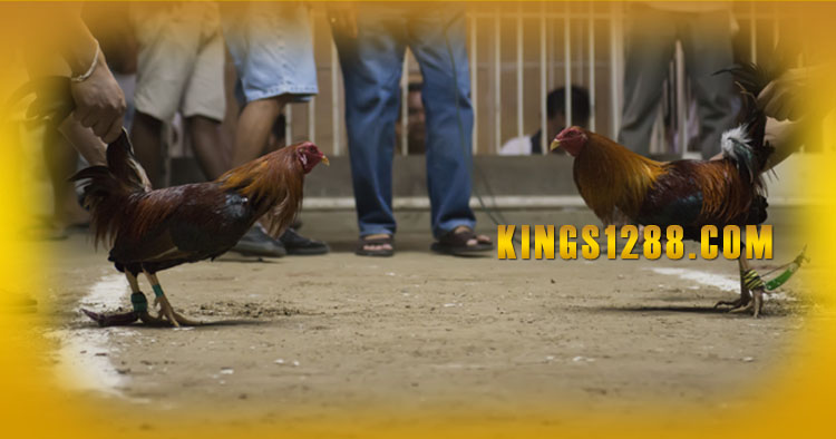 Bandar Sabung Ayam S128