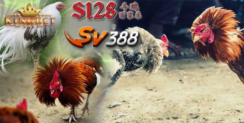 S128 Laga Ayam