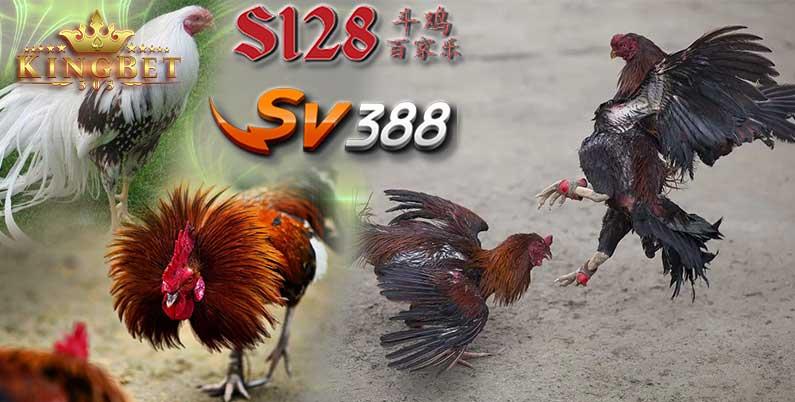 Live S128 Online